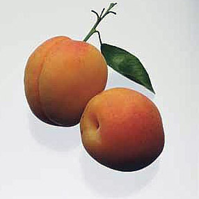 apricot Apricot   Nutrition Information & Facts