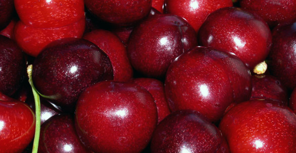 cherry fruit sweet red CHERRY FRUIT   Health Benefits & Nutritional details