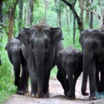 muthanga-wildlife-sanctuary-wayanad-india