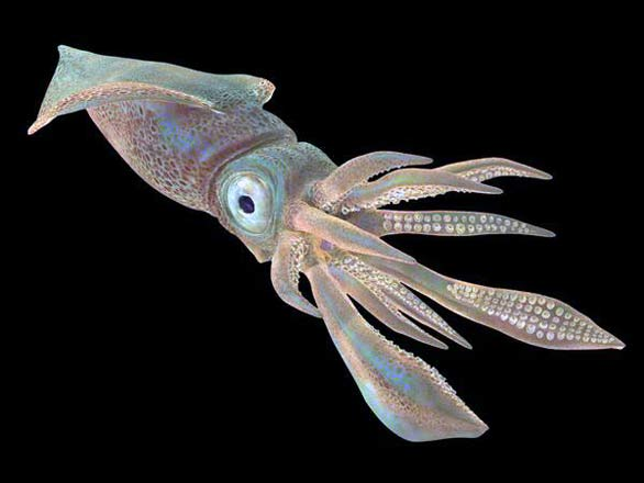 Top 12 Most Amazing Sea Monsters