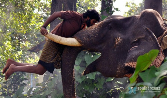 kumki vikram prabhu lakshmi menon love making stills 5 586x346 Kumkis extraordinary collections!